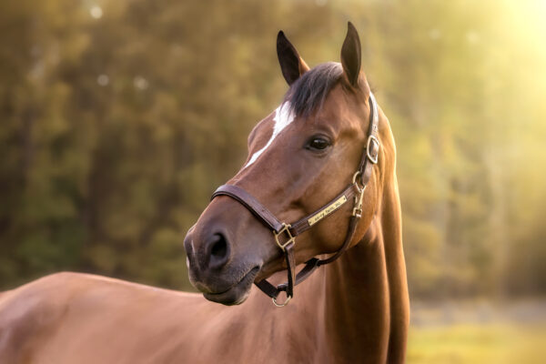 Equestrain Photography in New Jersey