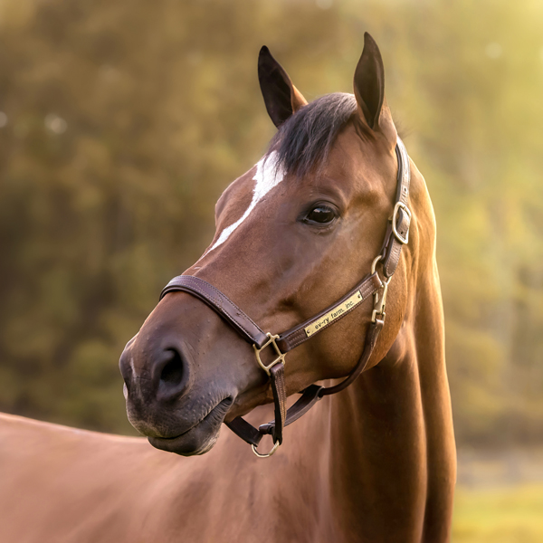 Horse Photographer in South Jersey